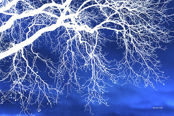 Escaping The Blues Weeping Tree Art Print by Christina Rollo