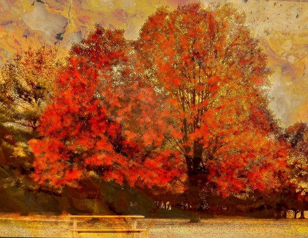 Rick Todaro - Essence Of  Fall