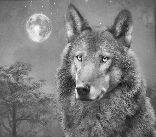 European Wolf Print by Roy  McPeak