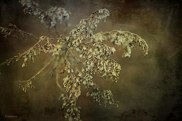 Even Weeds Are Beautiful Print by Terry Rowe