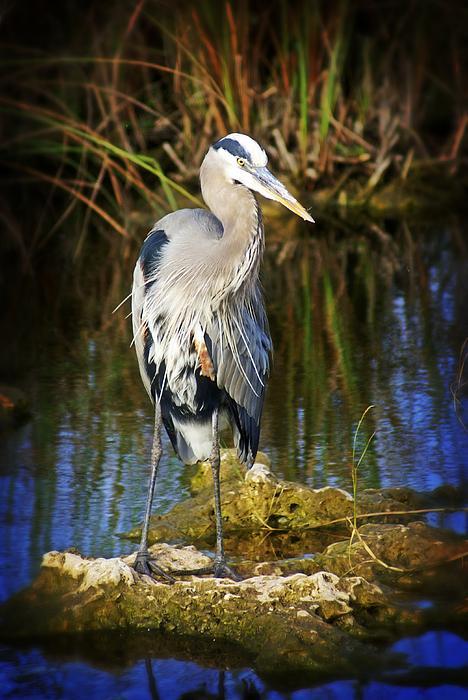 Everglades Blue Print by Marty Koch