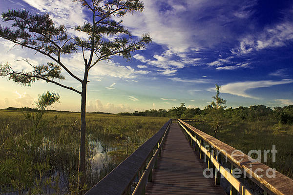 Everglades Trails Print by Swank Photography