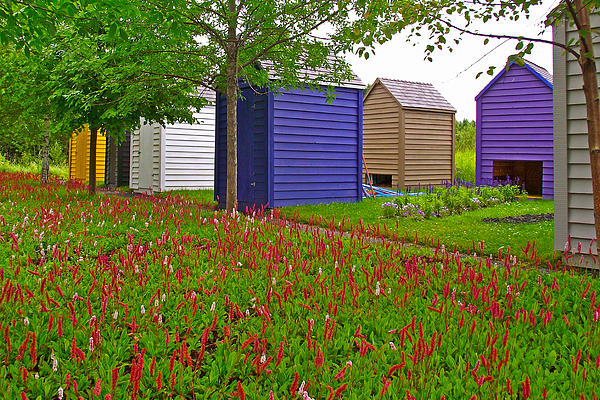 Every Garden Needs A Shed And Lawn In Les Jardins De Metis/reford Gardens-qc Print by Ruth Hager