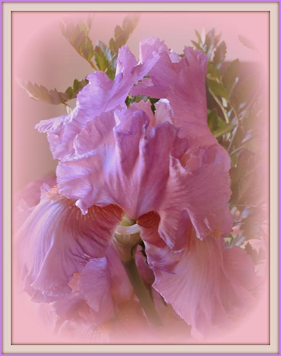 Kay Novy - Exotic Iris