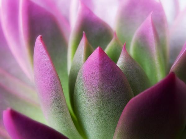 Exotic - Pink Purple Green Flower Landscape Photograph Print by Artecco Fine Art Photography