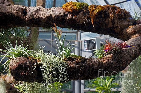Exotic Plants Print by Rod Jones