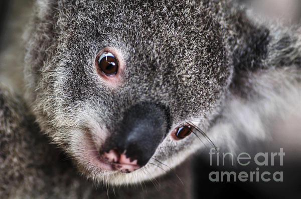 Kaye Menner - EYE am watching you - Koala