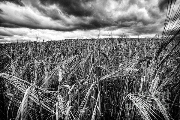 Facing The Storm Print by John Farnan