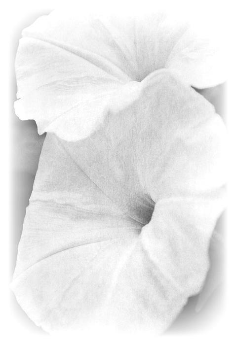 Kelly Nowak - Fade to White