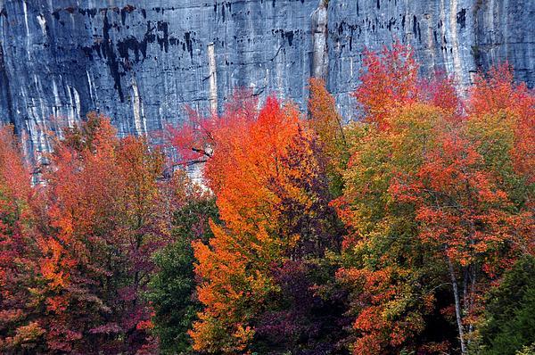 Fall At Steele Creek Print by Marty Koch