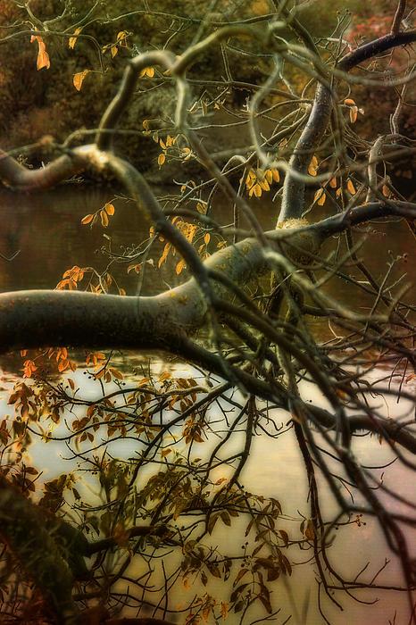 Fall At The Creek Print by Ellen Heaverlo