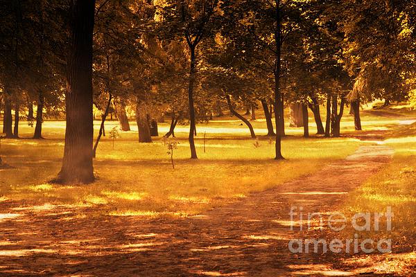 Fall Autumn Park Print by Michal Bednarek