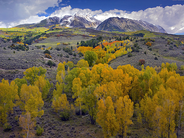 Fall Colors At Chair Mountain Colorado Print by Tim Fitzharris