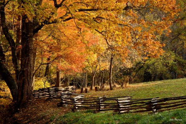 Fall Colors Print by John Pagliuca