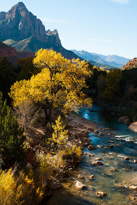 Fall Colors Virgin River Zion National Park Utah Print by Robert Ford