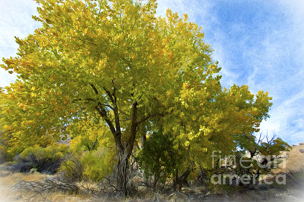 Fall Cottonwoods Print by Dianne Phelps