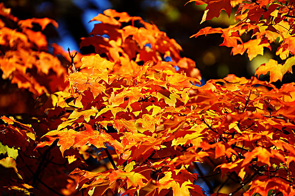 Fall Foliage Colors 16 Print by Metro DC Photography