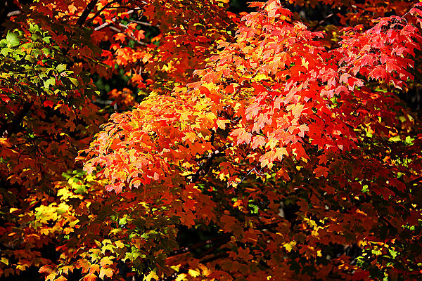 Fall Foliage Colors 21 Print by Metro DC Photography