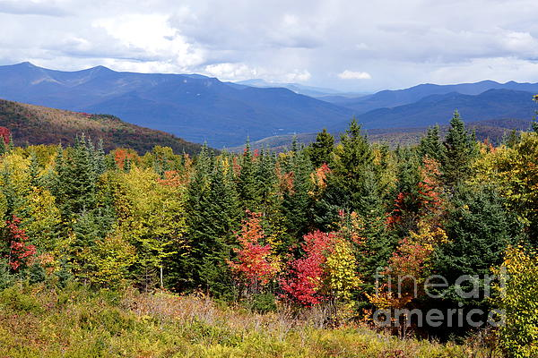 Fall Foliage Print by Kerri Mortenson