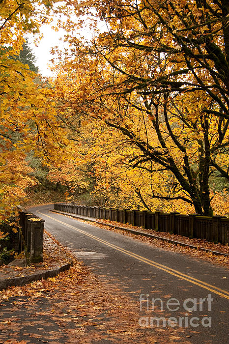 Fall Foliage On The Highway Print by Cari Gesch