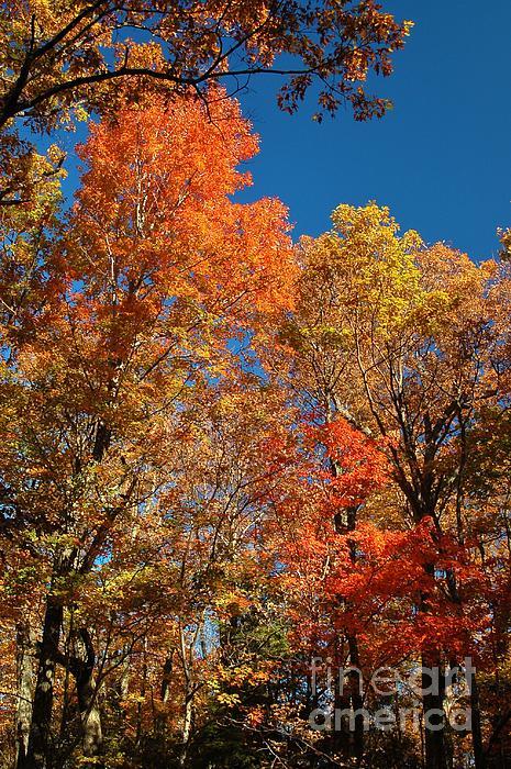 Fall Foliage Print by Patrick Shupert