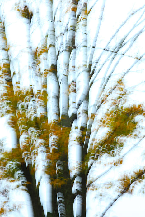 Fall In Motion Print by Karol  Livote