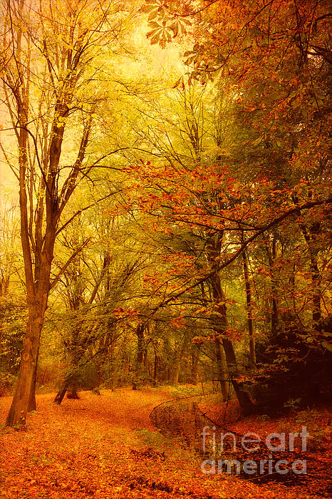 HJBH Photography - Fall in the forest