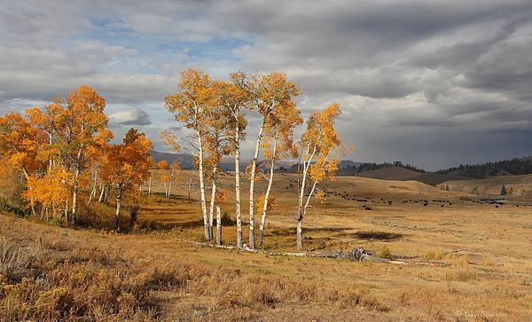 Fall In Yellowstone Print by Daniel Behm