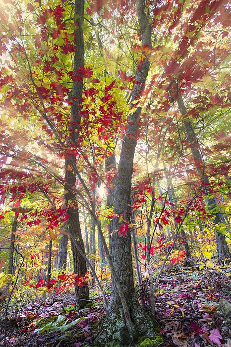 Fall Laser Beams Print by Debra and Dave Vanderlaan