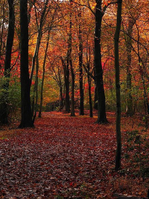 Fall Path Print by Raymond Salani III