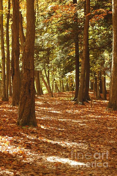 Kathleen Struckle - Fall Pathway