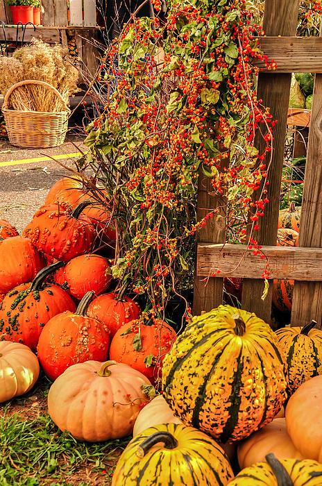 Fall Produce Print by Gene Sherrill