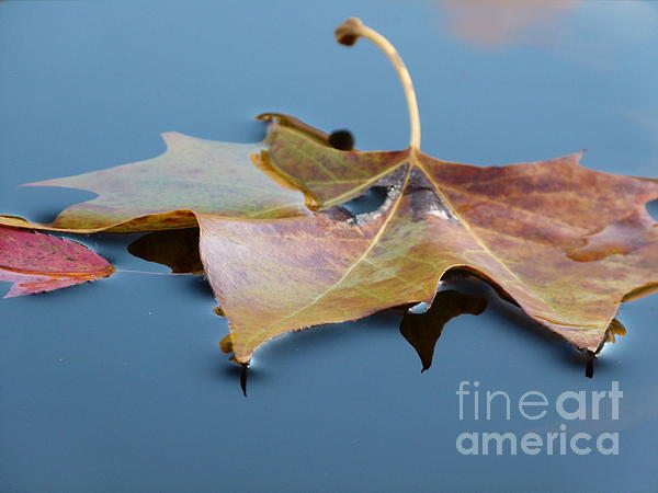 Fall Reflections Print by Jane Ford