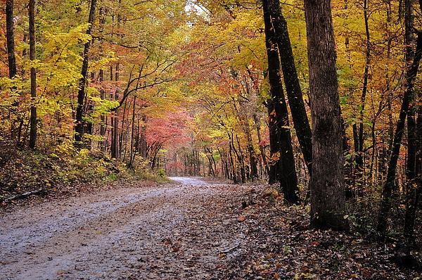 Fall Road Print by Marty Koch