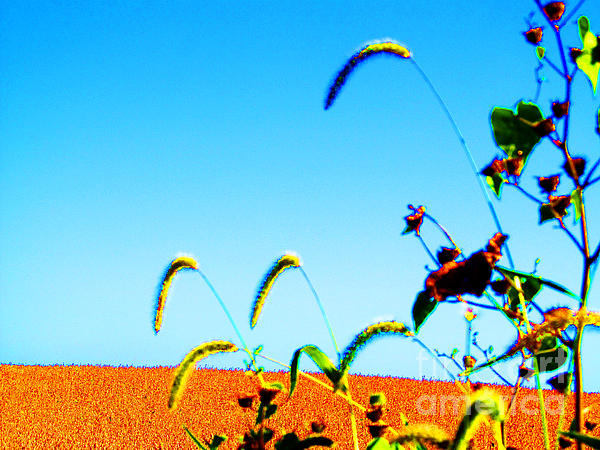 Fall Skies On Soybeans Farm Print by Tina M Wenger