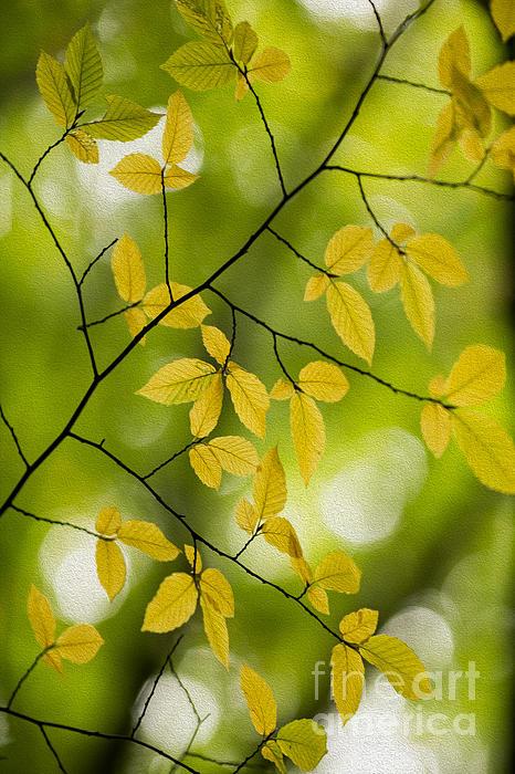 Rebecca Cozart - Fall Yellow Leaves 3