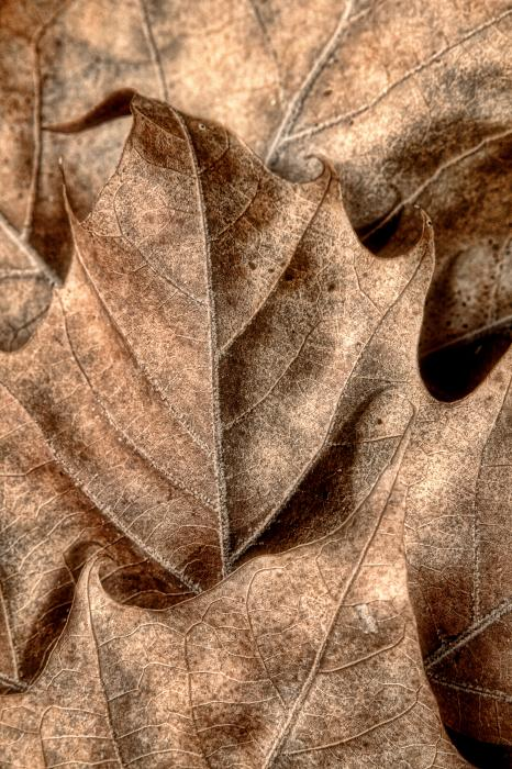 Fallen Leaves I Print by Tom Mc Nemar