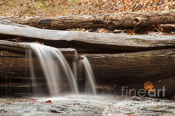 Falls Through A Tree Print by Darleen Stry