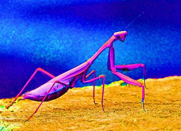 Fantasy Mantis Dance Print by Margaret Saheed