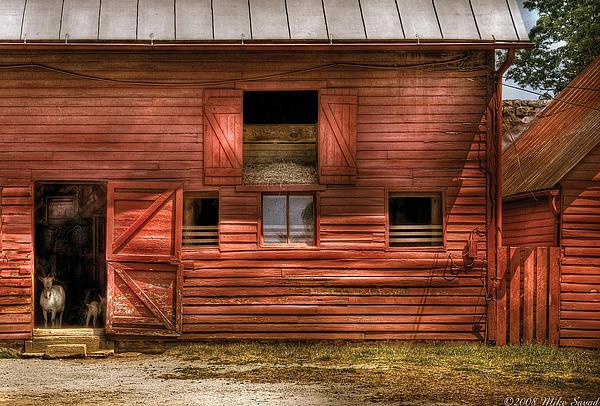 Farm - Barn - Visiting The Farm Print by Mike Savad