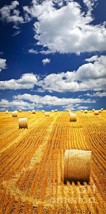 Farm Field With Hay Bales In Saskatchewan Print by Elena Elisseeva