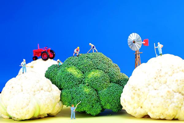 Farming On Broccoli And Cauliflower Print by Paul Ge