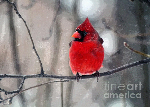 Catherine Sherman - Fat Cardinal in the Snow