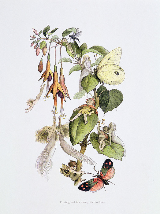 Feasting And Fun Among The Fuschias Print by Richard Doyle