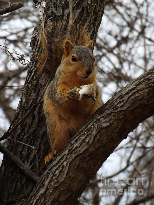 Feasting On Fish Fox Squirrel Print by Sara  Raber