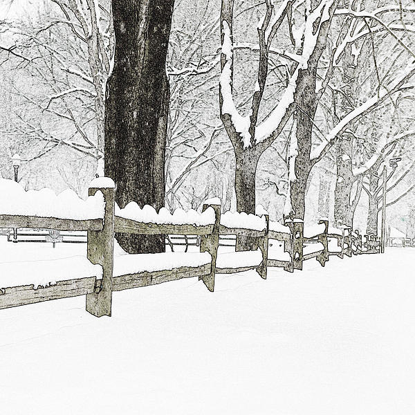Fenced In Forest Print by John Stephens