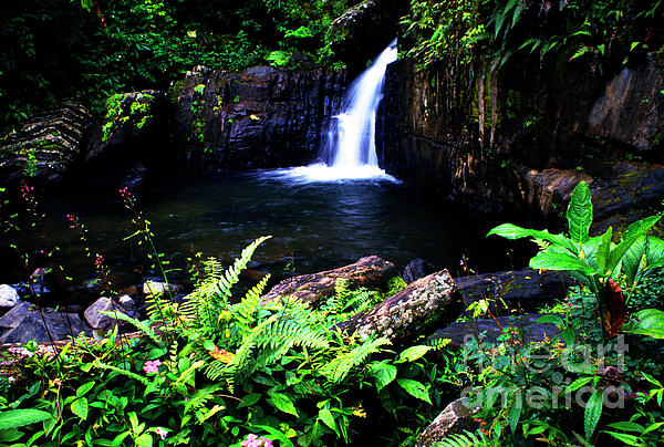 Ferns Flowers And Waterfall Print by Thomas R Fletcher