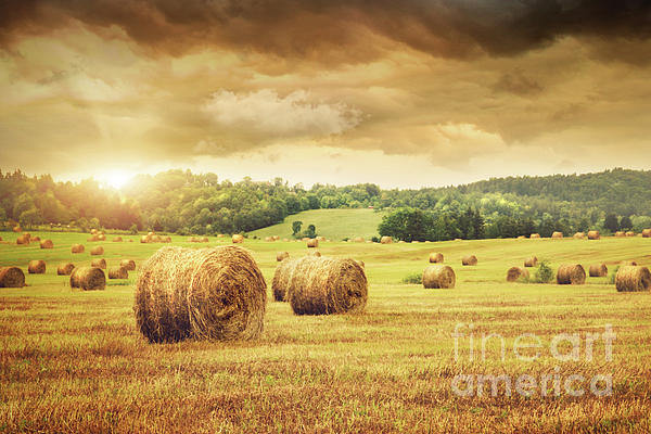Field Of Freshly Bales Of Hay With Beautiful Sunset Print by Sandra Cunningham