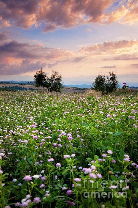 Field Of Wildflowers Print by Brian Jannsen