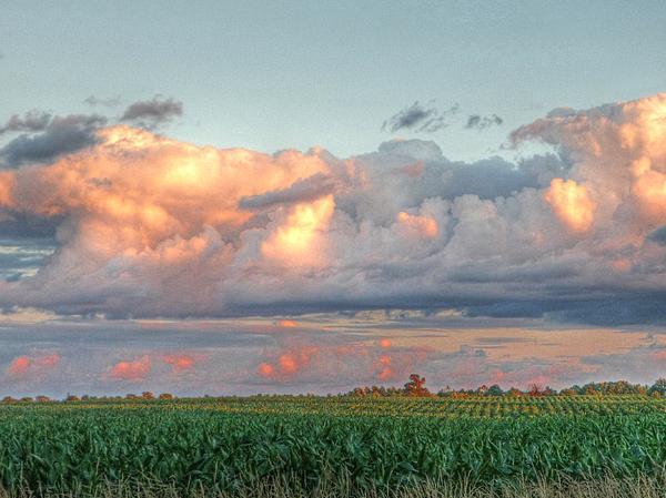 Fields Of Corn Print by Heather Allen